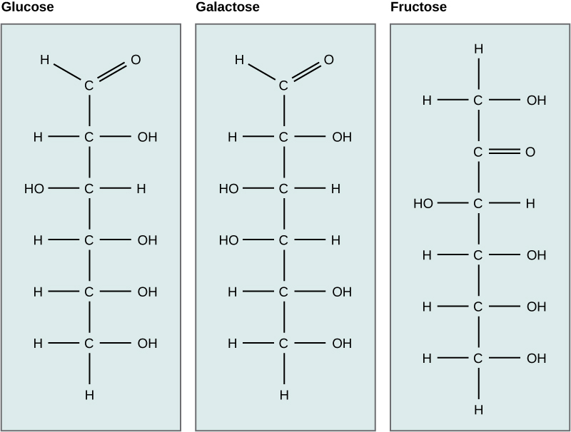 Chapter 2 Chemistry Of Life Biology Open Course Framework