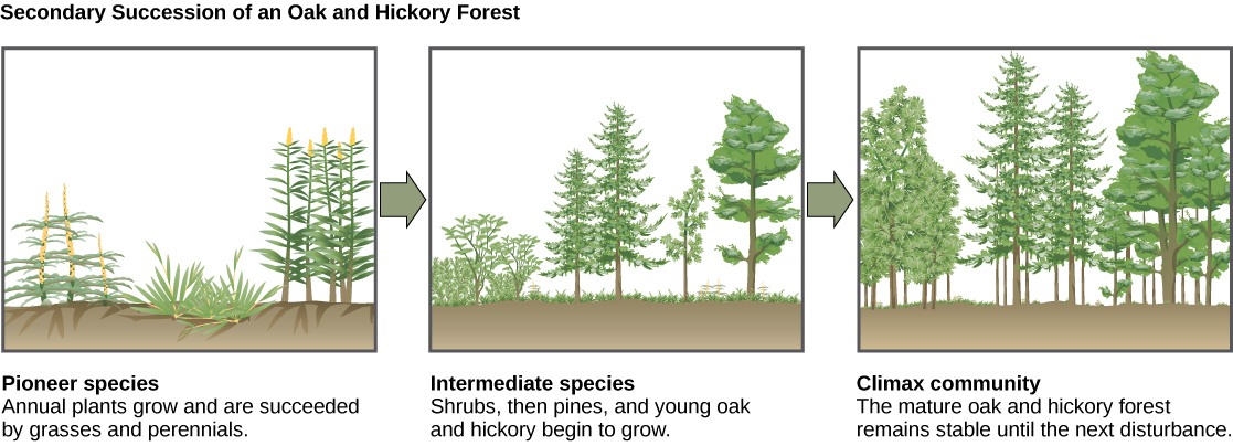 what is the difference between natural selection and ecological succession Types and stages of ecological succession: ecological succession is the term used to describe what happens to an ecological community over time  on the natural .