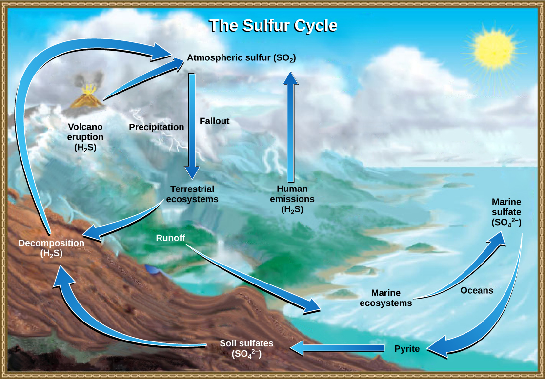 biogeochemical cycles and human impacts A biogeochemical cycle is the complete path a chemical takes through the earth's  human impacts include dam construction,  biogeochemical cycles in ecosytems.